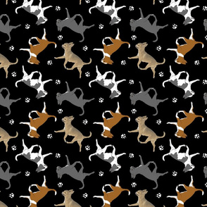Trotting smooth coat Chihuahuas and paw prints C - black