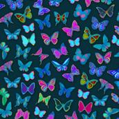 Painted Rainforest Butterflies