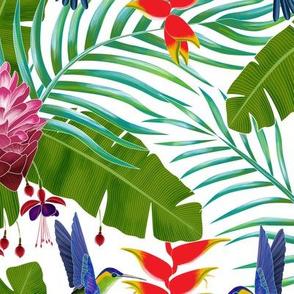 Hummingbird in the Rainforest