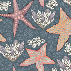 Starfish, Mussels and Barnacles, oh my!