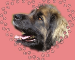 Rleonberger_heart2_thumb