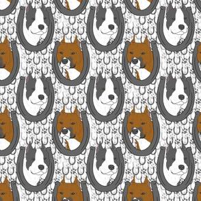 American Staffordshire Terrier horseshoe portraits