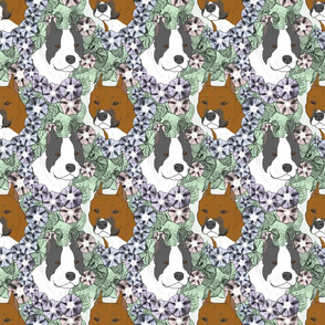 Floral American Staffordshire Terrier portraits