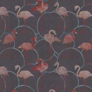 Walk with flamingos