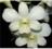 D-somrak_white