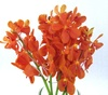 mokara cut flowers, klairvoyant orchids, guruvayur