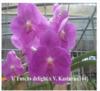vanda orchids, orchids, thrissur, kerala,klairvoyant orchids