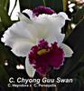 cattleya orchids, thrissur, kerala, india,online sale, C. Chyong Guu Swan