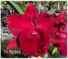 cattleya orchids, thrissur, kerala, india,online sale, C.Hey song