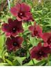 Orchids, dendrobium, garden design, thrissur, kerala, online sale