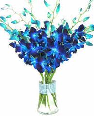 dendrobium blue cut flower