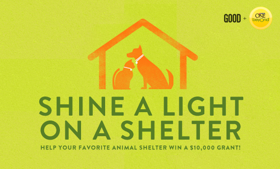 Shine a Light on a Shelter