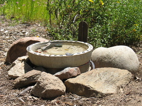 Sdaudubon.birdbath