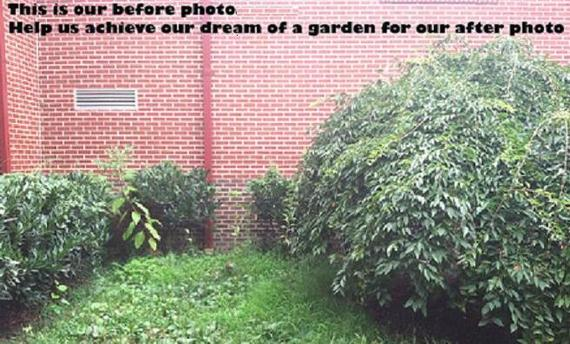A garden full of big dreams!