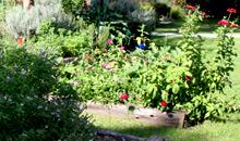 Community gardens link
