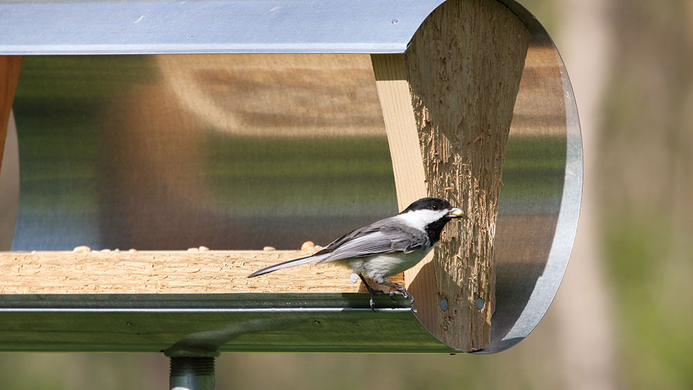 DIY a Covered Bird Seed Tray
