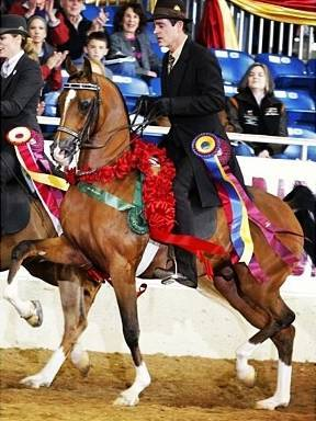 Dam of National Champion AFIRES STYLE (x Afire Bey V)
