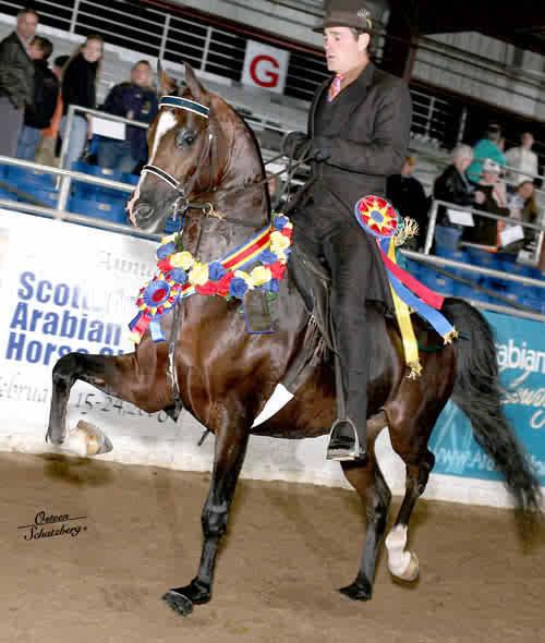 BRAVE AND NOBLE ~ National Champion son of Sweet Bravada V