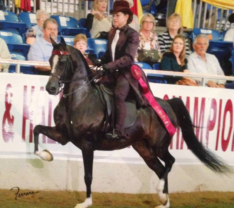 Dam of NOBLE FINERY owned by Diane Comeau and ridden by Carla Jackson to 2014  AEPA 5th Place