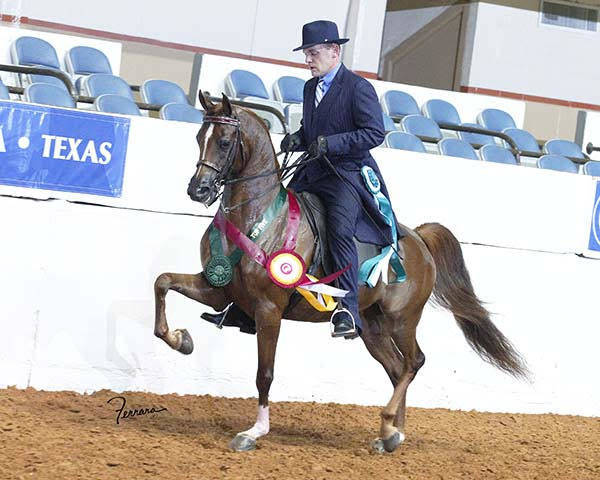 2015 Region 9 Reserve Champion English Pleasure Jr Horse