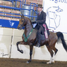 Region 11 Top 5 Country English Pleasure Jr Horse (3rd week in a double bridle)