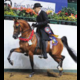 Dam of National Champion AFIRES ROYALTY+/