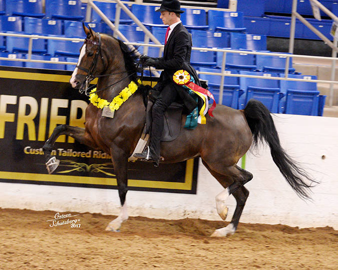 2017 Scottsdale Reserve Champion HA/AA English Pleasure AATR ~