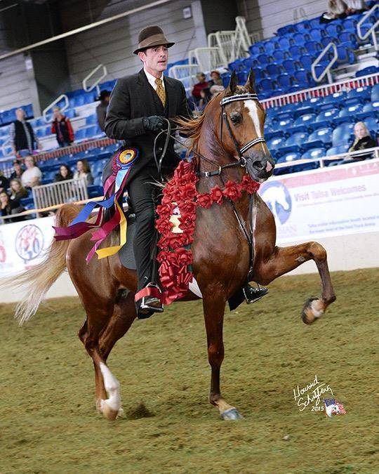 National Champion DEBONHEIR DGL (Afires Heir x Felicia Afire)