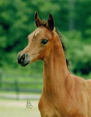 BONITA AFIRE as a foal