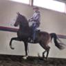 Colts - Geldings - Stallions