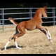 2018 colt by INCEPTION x Rumorr Has It (Afire Bey V x Read My Mind by VF Premonition)