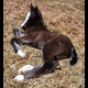 2019 filly by INCEPTION x Best of My Love (Vegaz x River Dance NA by A Major Fire)