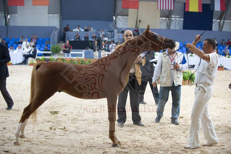 Morocco 2012