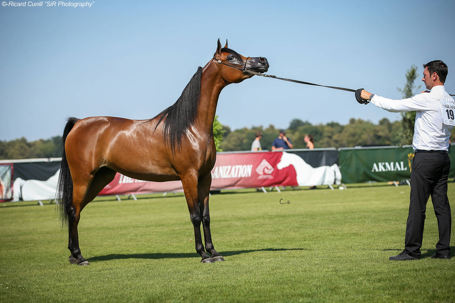 AHO WORLD CUP 2018 - Chantilly