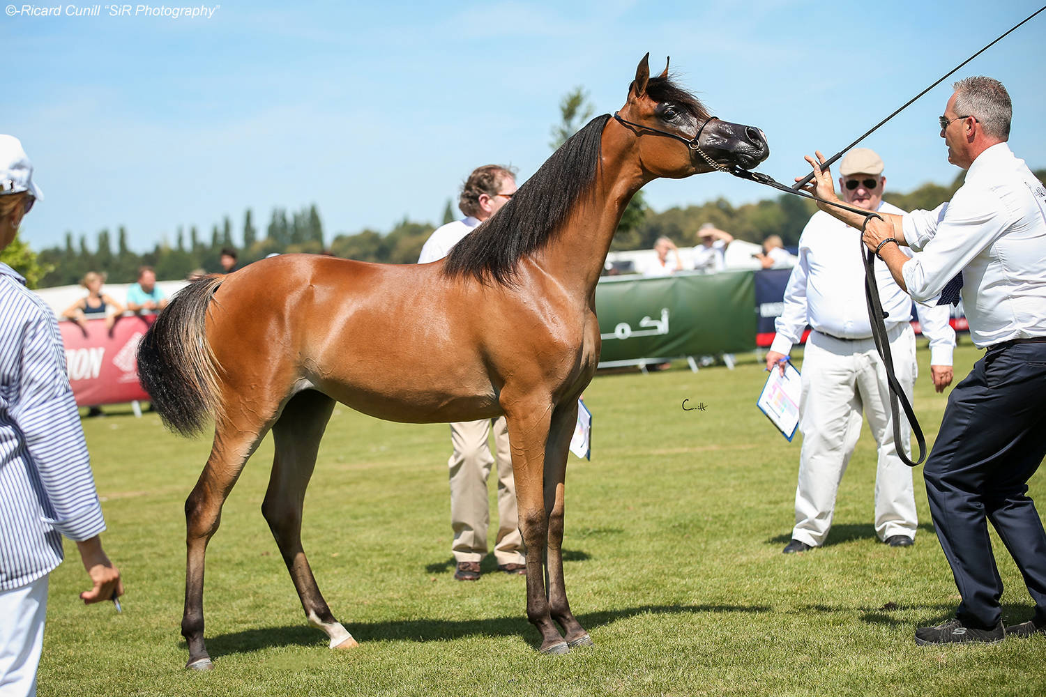 AHO Breeders' Championship Europe 2018 - Chantilly