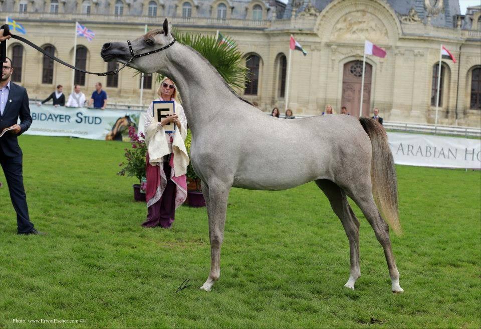 Chantilly 2014