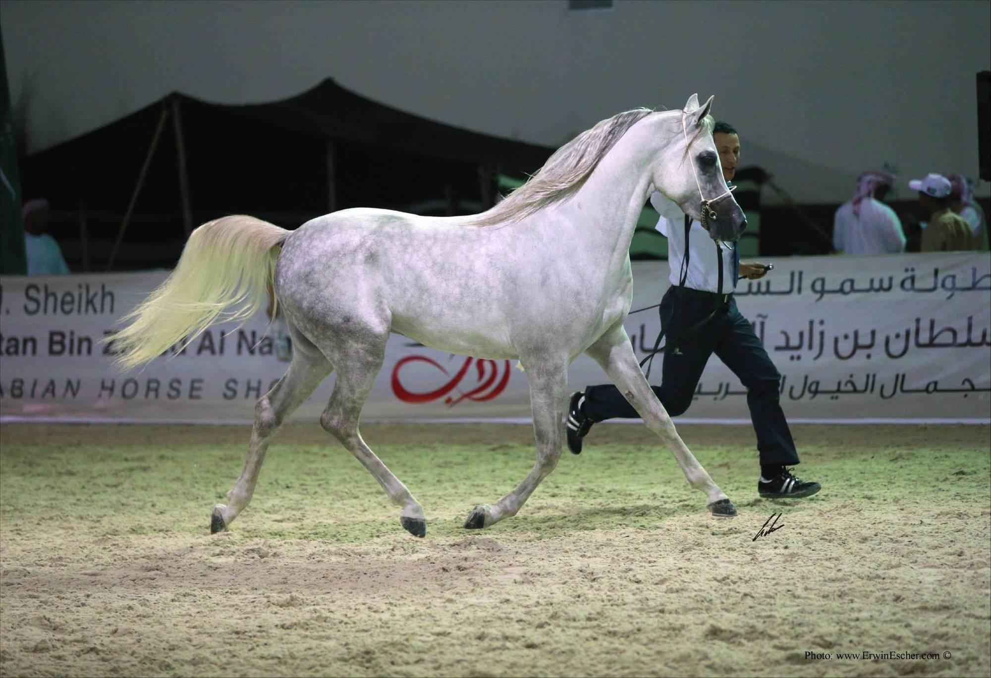AHO Championships 2014