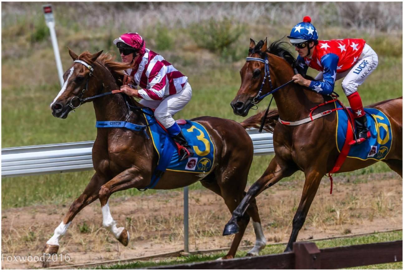 Arabian Racing On Saturday 18th March 2017 Arabian Horse Society Australia