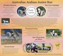 Junior Arabian Star - Miss Emily Larsen