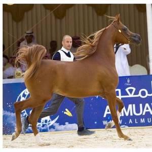 4th Saudi Arabia Breeders Show - Taif
