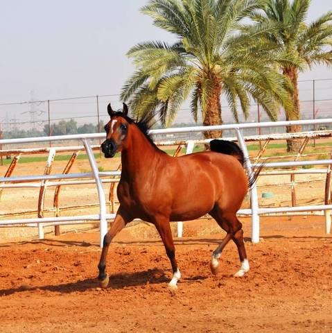 Areeb Al Mohamadia