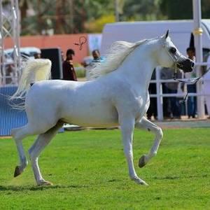 Nawaf Al Mohamadia