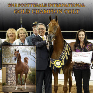 Prussia MI - 2013 Scottsdale International Gold Champion Colt
