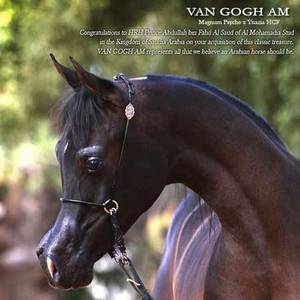 Announcing the addition of VAN GOGH AM to the Al Mohamadia Team!