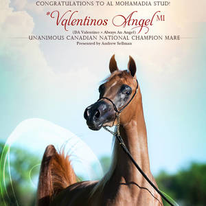 *Valentinos Angel MI - Canadian National Champion!