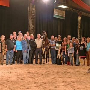 Van Gogh AM, Gold Champion Stallion - Scottsdale International - Unanimous
