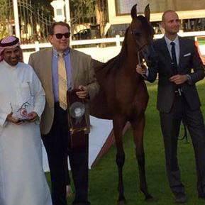 HH Sheikh Sultan bin Zayed/AHO Breeders Championship - February 2015