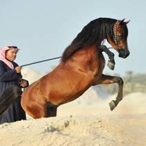 Nadeer Al Rashediah