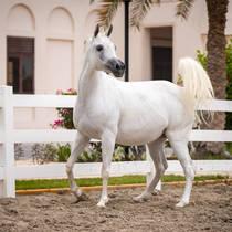 Dahman Al Rashediah