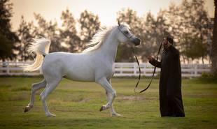 Omnia Al Shaheen